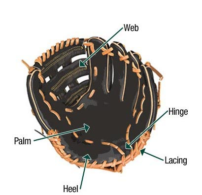 Parts of the Baseball Glove